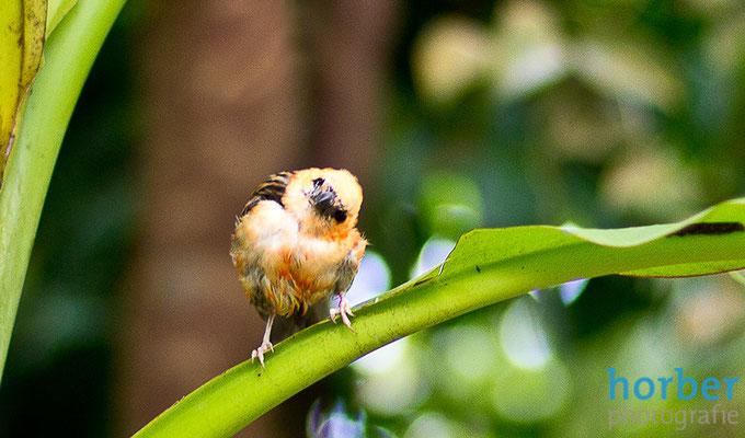 Vogel fotografiert von Matthias Horber horber marketing